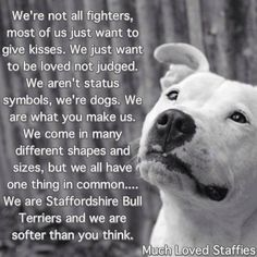 much loved Staffies