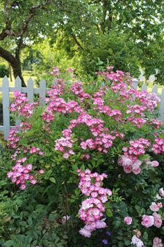 Mozart:  Notre jardin secret...
