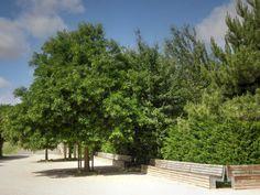 Parc des sports et des loisirs du Grand Godet à Villeneuve-le-Roi, Orly et Choisy-le-Roi - Bancs et escaliers à l'entrée