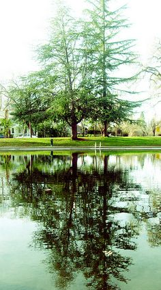 Trees! | Chico Creek - One Mile (Chico California) #ChicoCA