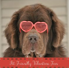 5 Fun Valentine's Day Contests For Your Furry Cupids