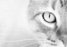 Hey, I found this really awesome Etsy listing at http://www.etsy.com/listing/103944748/cat-photography-animal-photography-cats