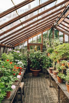 Book here for tickets to Chelsea Physic Garden. Information on our opening hours and admission prices. Indoor Garden, Indoor Plants, Outdoor Gardens, Backyard Greenhouse, Greenhouse Plans, Dream Garden, Home And Garden, Garden Bar, Herb Garden