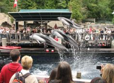 Watching the outdoor show at Vancouver Aquarium (follow for my tips for your visit)