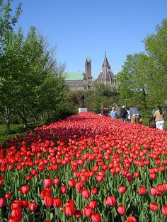 Beautiful Ottawa http://www.travelandtransitions.com/destinations/destination-advice/north-america/