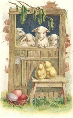 barn door, lambs, chicks