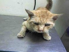 TO BE DESTROYED 10/21/14 ** SENIOR ALERT! Per ACC: Winky is a very sweet older boy that needs just a little TLC. He came in with URI and is looking so much better and seems to be eating well this morning. ** Staten Island Center My name is WINKY. My Animal ID # is A1017737. I am a male orange domestic sh mix. The shelter thinks I am about 10 YEARS old. I came in the shelter as a STRAY on 10/16/2014 from NY 10312