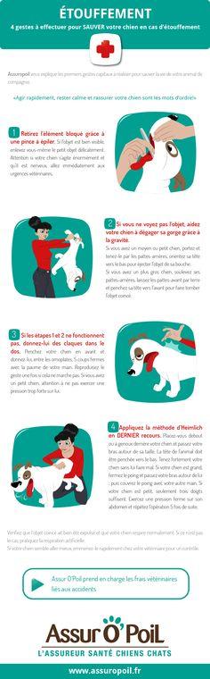 Assur O' Poil La Mutuelle Chien vous informe sur les 4 gestes à effectuer pour sauver votre chien en cas d'étouffement. Il ne faut surtout pas paniquer et agir rapidement.