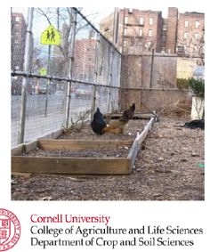 What gardeners can do: Tips for Urban Chicken Keepers. #healthygardening #chickenkeeping #urbanchickens #gardening #healthysoils   http://cwmi.css.cornell.edu/healthysoils-3.htm   In English PDF downloads  http://cwmi.css.cornell.edu/WhatGardenersCanDoChickens.pdf  and Spanish http://cwmi.css.cornell.edu/WhatGardenersCanDoChickens-Spanish.pdf Cornell Waste Management - Cornell University