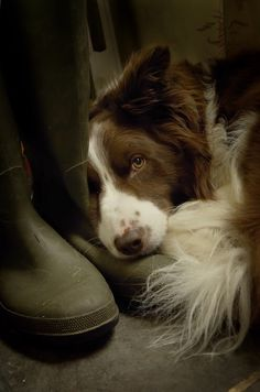 Waiting for the moment my master puts these boots on and takes me out for a romp :)