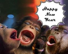 Funny Happy New Year Images 2019 - Cute Funny New Year Images & Pictures Funny New Year Images, Funny New Year Messages, New Year Wishes Funny, New Year Quotes Funny Hilarious, Happy New Year Funny, New Year Meme, Happy New Year Pictures, Happy New Year Message, Happy New Year Greetings