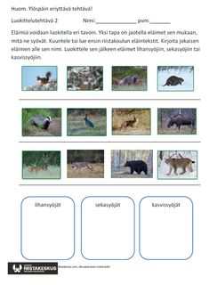 Tulostettavat tehtävät alkuopetukseen – Riistakoulu Science Art, Science And Nature, Nature Crafts, Forest Animals, Preschool, Environment, Woodland Creatures, Kid Garden, Science And Nature Books
