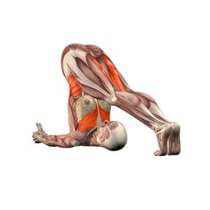 Plow pose, hands under head - Halasana advanced - Yoga Poses | YOGA.com