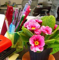 Mejores plantas para decorar tu escritorio en la oficina