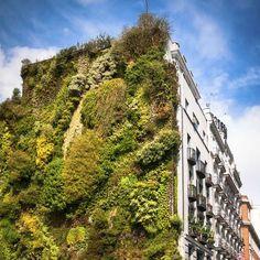 Alan Titchmarsh, consejos, vertical, plantación, jardín, hogar, pared, de estar
