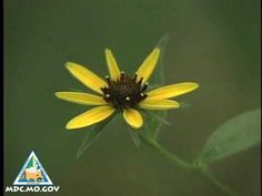 Flower Pollination (1-min video)
