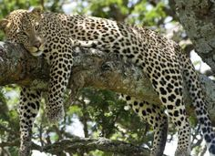 Selous Game Reserve (By Air) 3 nights 4 days Africa safari