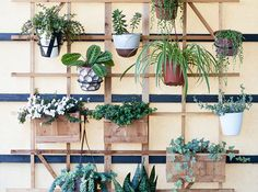 Posted on A Beautiful Mess blog, Toshiko's planter trellis is a smart solution for a lush look when floor space is at a premium.