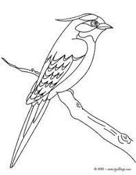 Resultado de imagen para stencil opa de pajaros