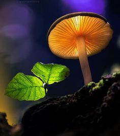 Eclairé par des ampoules LED, ce champignon ressemble à une lampe
