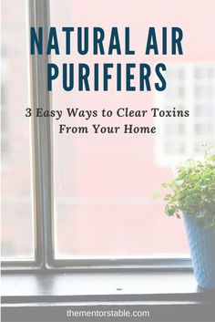 3 Natural Air Purifiers to help you stop airborne germs from spreading to your family.