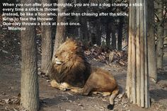 """Post with 0 votes and 87760 views. """"When you run after your thoughts, you are like a dog chasing a stick. Lion Motivation, Lion Quotes, Like A Lion, Tibetan Buddhism, Dog Runs, One And Only, Logo Inspiration, Mindfulness, Horses"""
