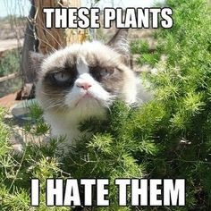 12 Animal Memes That Make Us LOL: Just about everywhere you turn there's a silly animal meme: advice animals, grumpy cats, and puns galore.