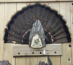 #turkey #hunting springbrooklaser.com Turkey Fan, Wild Turkey, Deer Hunting Tips, Hunting Stuff, Hunting Home Decor, Turkey Mounts, Crane, Deer Mounts, Turkey Calling