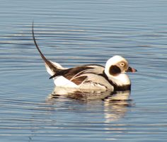 Beth's Blog: Search results for carolina beach birds