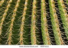 Google Image Result for http://image.shutterstock.com/display_pic_with_logo/63301/63301,1266559875,1/stock-photo-nature-pattern-cactus-macro-46974211.jpg