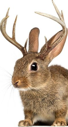 Adopt a Jackalope at https://themagicalanimaladoptioncenter.wordpress.com! Remember, you have to believe in the Magical Creatures to see them!