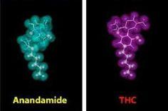 http://www.trichomelabs.com/-cannabinoid-receptors.html