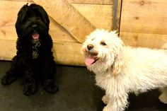 It's smiles all around for new friends Odin & Buddy.