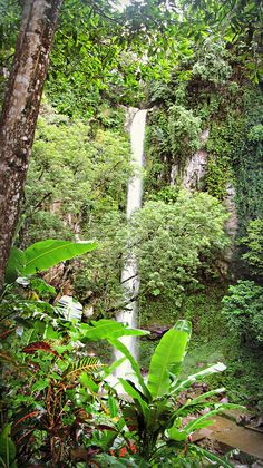 Katibawasan Falls, Camiguin Island, Philippines i miss you Best Places To Travel, Vacation Places, Places To See, Vacations, Philippines Tourism, Visit Philippines, Travel Around The World, Around The Worlds, Belle Villa