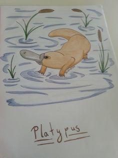 Ein Schnabeltier (Platypus)