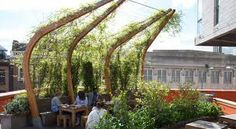 Another space efficient roof planting strategy - trellises that will support vine planting AND provide summer shade for the roof deck (privacy deck for residences - on top of garage???)