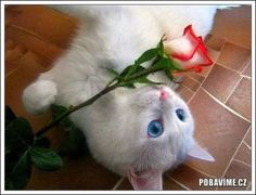 and the beautiful white cats! Cat Hug, Dog Cat, White Kittens, Cats And Kittens, Pretty Cats, Beautiful Cats, Cat Flowers, Cat Photography, Cat Lover Gifts