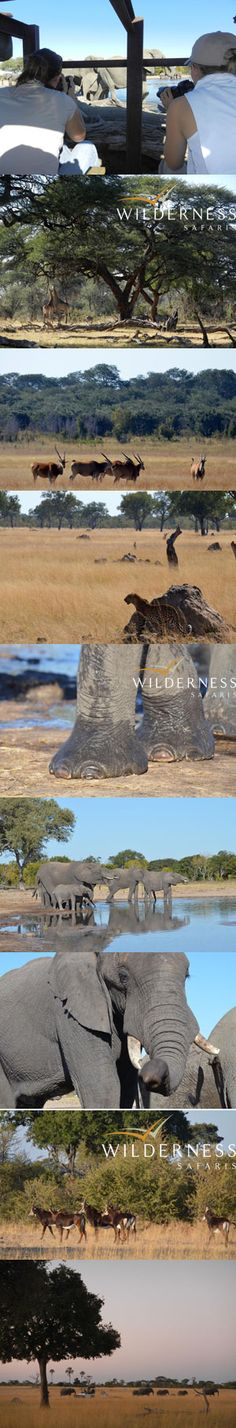 We Are Wilderness - Zimbabwe / Hwange - June 2013 - Click on the image for more. Zimbabwe, Conservation, Wilderness, Safari, Tourism, Wildlife, June, Heaven, Camping