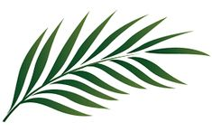 Image result for palm leaves