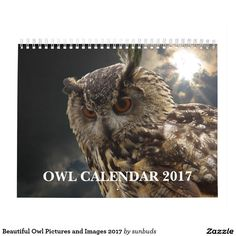 Beautiful Owl Pictures and Images 2017 Calendar