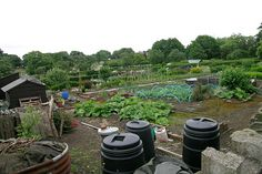 Great advice from the Royal Horticultural Society on starting an allotment.  The site also has a 'jobs to do' section by month with helpful videos and tips. Love it!