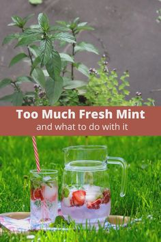 Is your mint plant going crazy? Do you have too many fresh or dried mint leaves? If you're wondering about uses of mint or what to do with too much fresh mint, I have the answer. Uses For Mint Leaves, Mint Plant Uses, Mint Leaves Recipe, Drying Mint Leaves, Mint Plants, Fresh Mint Leaves, Fruit Water, Fresh Fruit, Mint Recipes