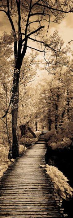 Amazing Wooden Pathway