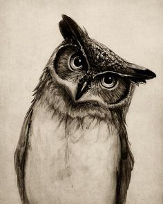 Sketch - Inquisitive looking owl... this would make an awesome tattoo