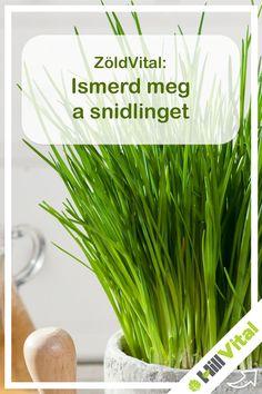 A snidling a hagymák családjába tartozik. Hívják még fűhagymának vagy pázsithagymának is. Akár a teraszon is termeszthető, ha megfelelően öntözöd. A virágját teheted salátába vagy jégkockatartóba vízzel lefagyasztva, ami jó lesz a koktélokba.  Nagyon gazdag a- és c-vitaminban, de tartalmaz kalciumot és vasat is. Vértisztító hatása van, csökkenti a vér koleszterinszintjét, és gátolja az érelmeszesedést is. Parsley, Celery, Vegetables, Food, Essen, Vegetable Recipes, Meals, Yemek, Veggies