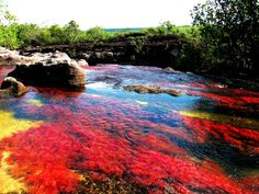 River of Five Colors/ Caño Cristales in Colombia Rainbow River, Indoor Water Garden, Crystal River, Nature View, Natural Wonders, Nature Photos, Continents, Mother Nature, The Good Place