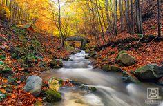 Iavas #alexbobica #photography #Romania #autumn