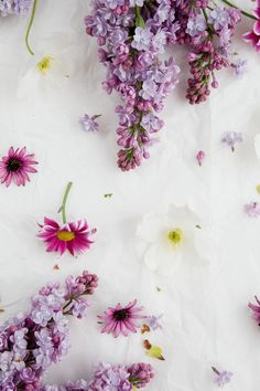 Free Floral Phone Wallpapers & Spring Collection & BiBs 2014 & Capture by Lucy Frühling Wallpaper, Spring Wallpaper, Wallpaper For Your Phone, Cellphone Wallpaper, Flower Wallpaper, Pattern Wallpaper, Floral Wallpaper Phone, Cute Backgrounds, Phone Backgrounds