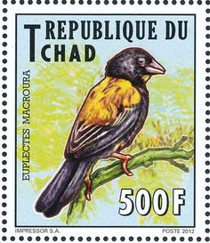 Yellow-mantled Widowbird stamps - mainly images - gallery format