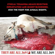 Eyes stabbed, throats cut, tendons slashed, legs broken, water hoses up noses… Animal Slaughter, Malinois Dog, Animal Agriculture, Why Vegan, Stop Animal Cruelty, Faith In Humanity, Animal Welfare, Animal Rights, Going Vegan